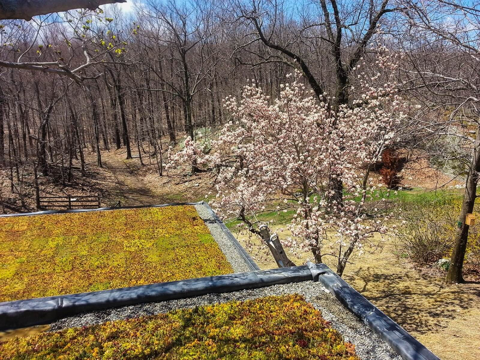 Highview Creations - Residential Green Roof for Vernon, NJ