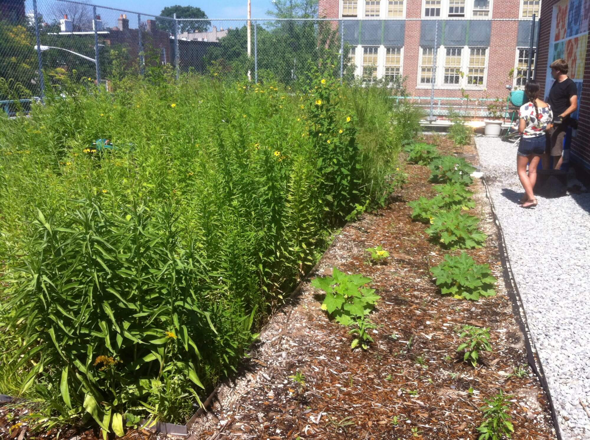 Highview Creations - Institutional Green Roof for M.S. 442