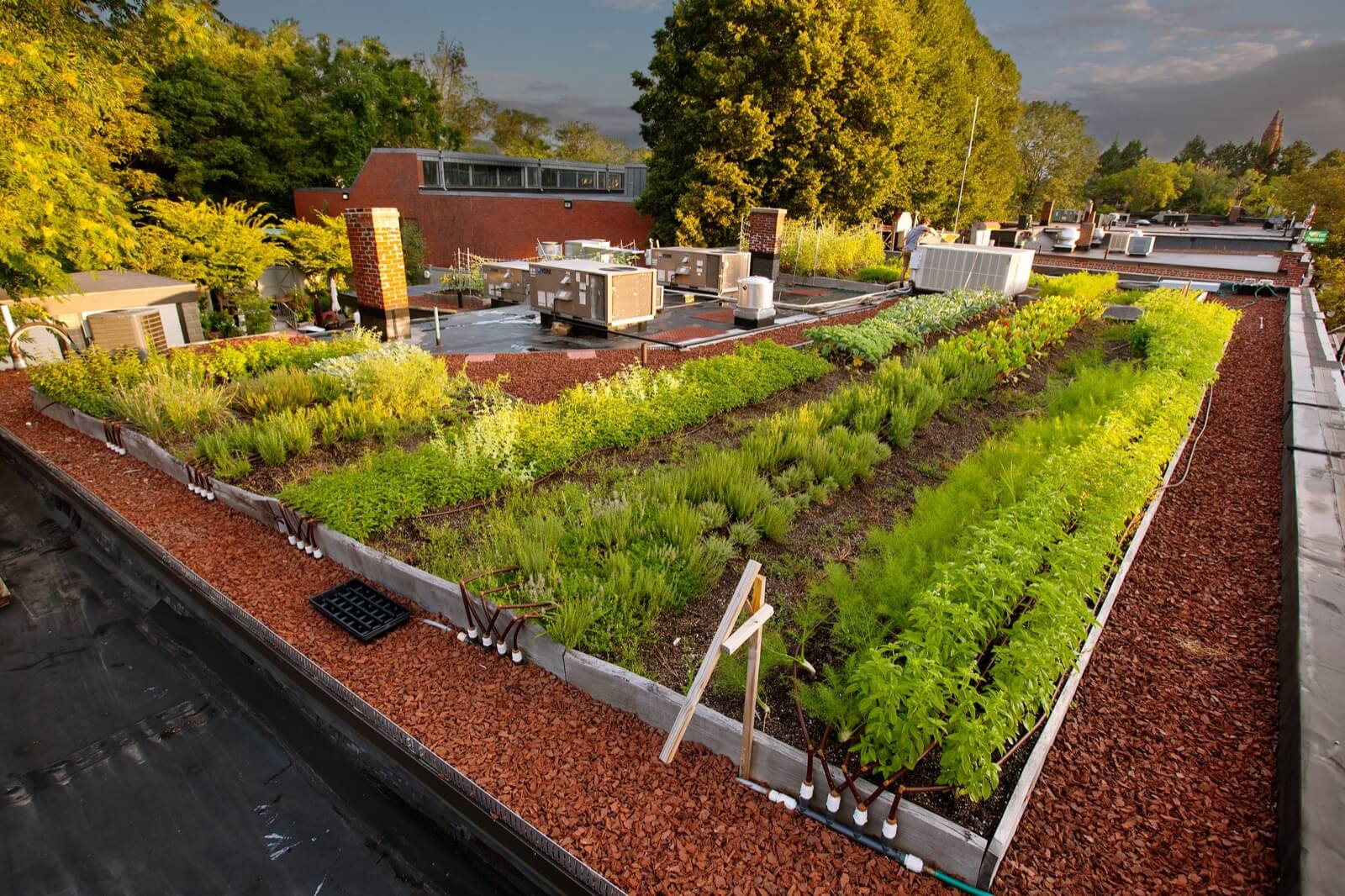 Highview Creations - Commercial Green Roof for Ester Restaurant