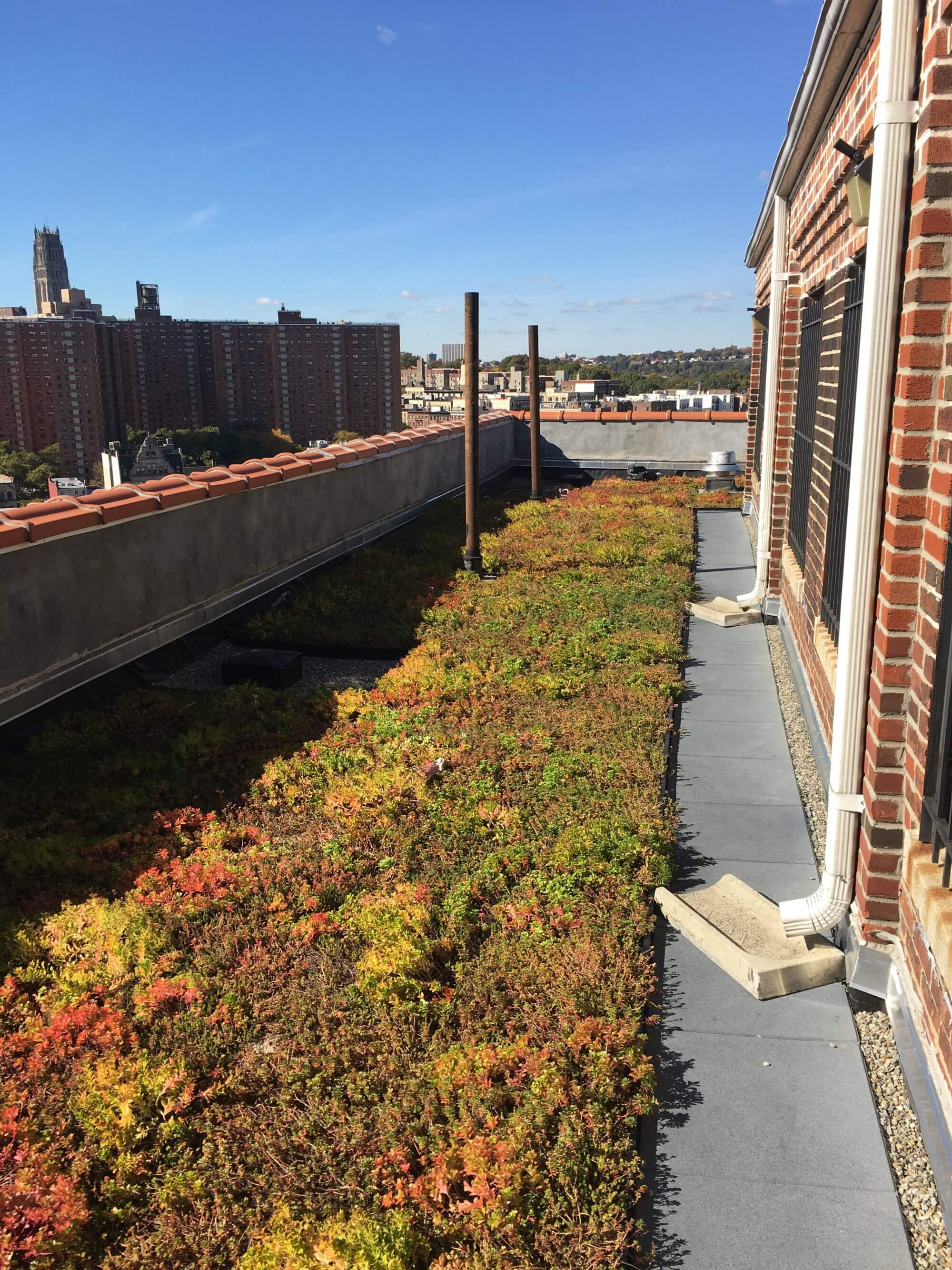 Highview Creations - Residential Green Roof for Logan Gardens