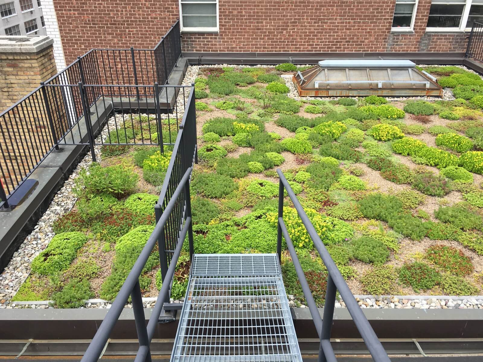 Highview Creations - Institutional Green Roof for Lenox Hill, Phase I