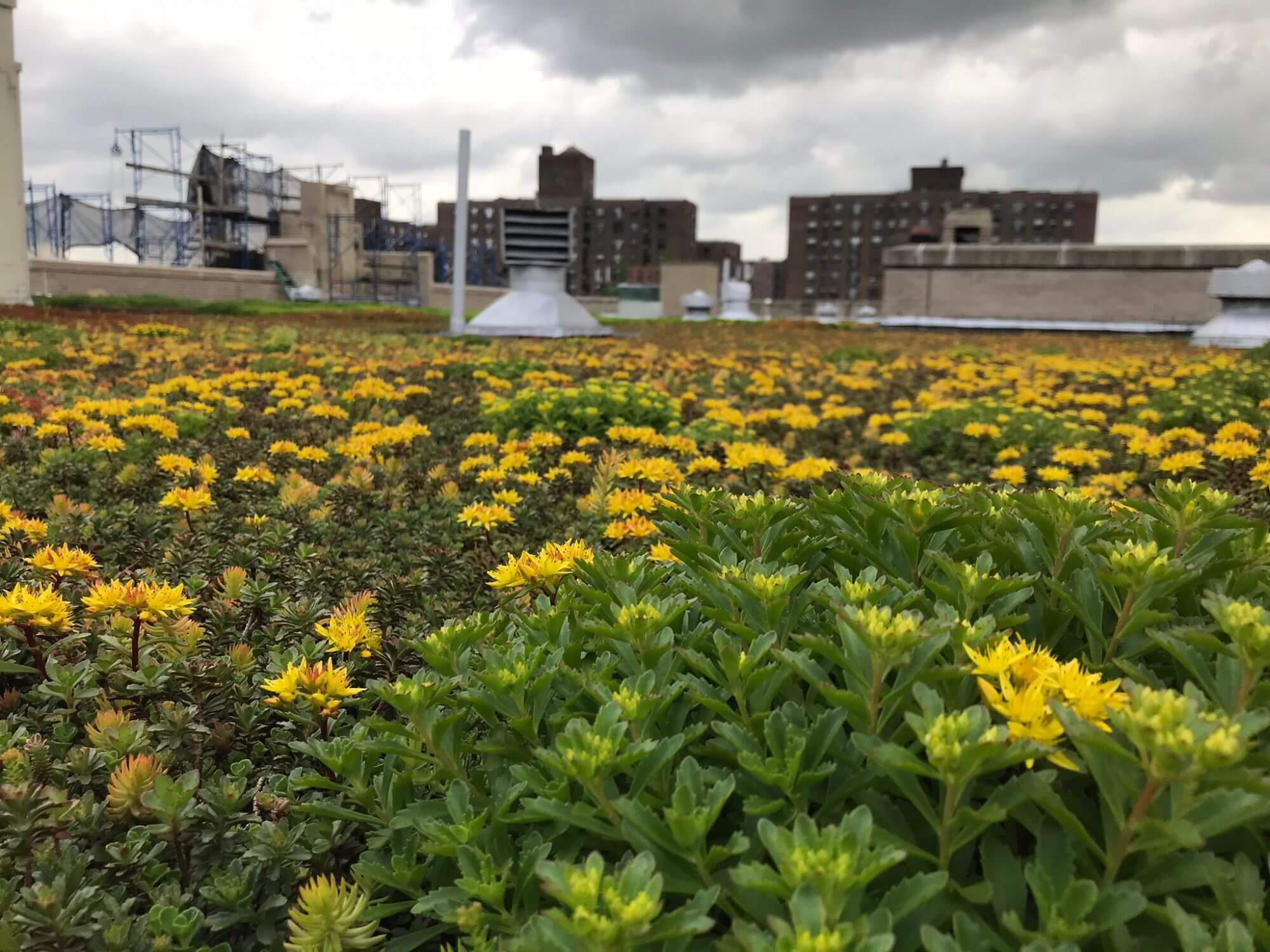 Highview Creations - Institutional Green Roof for Bishop Loughlin Memorial High School