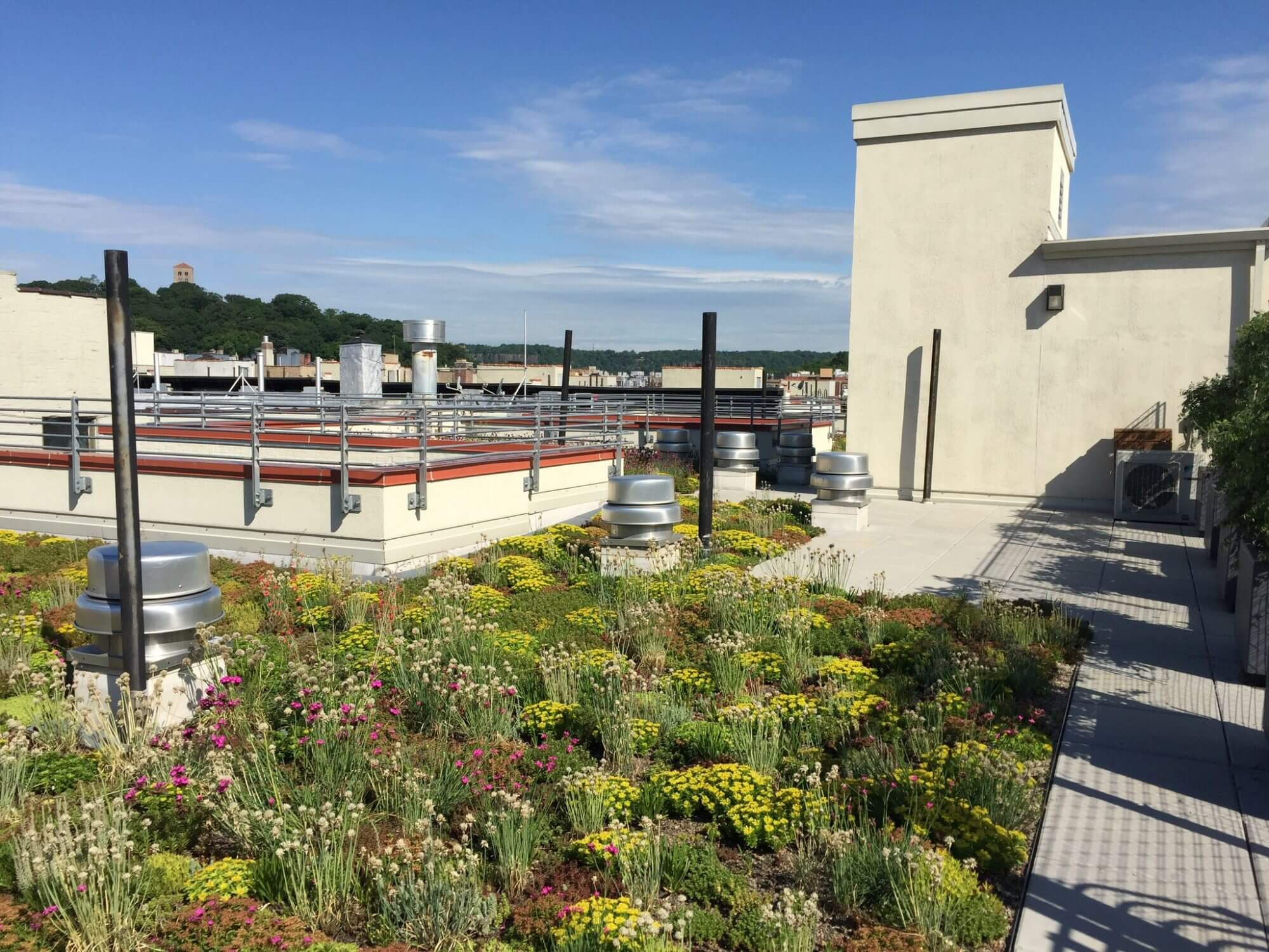 Highview Creations - Residential Green Roof for 552 Academy