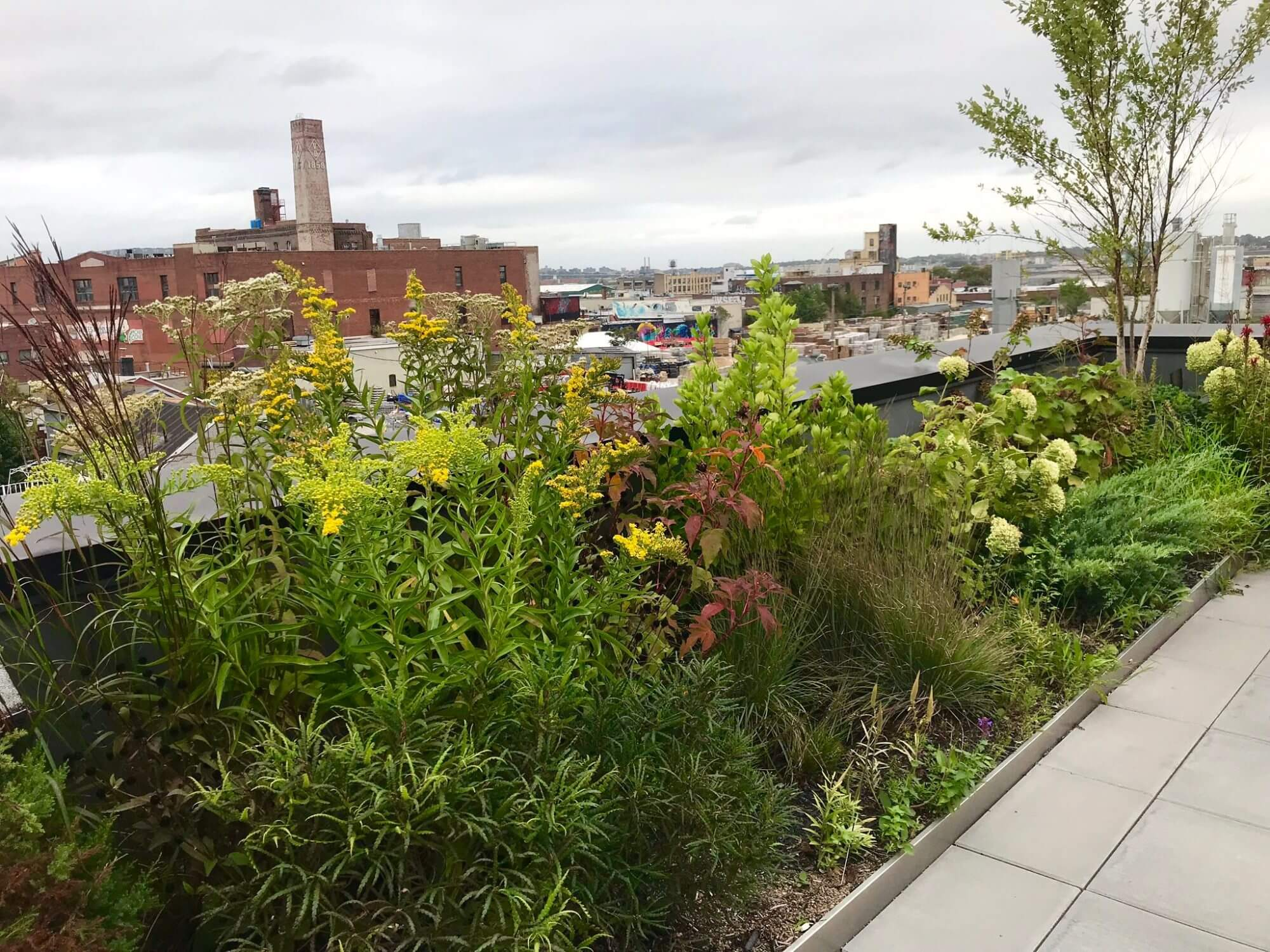 Highview Creations - Residential Green Roof for 246 Johnson