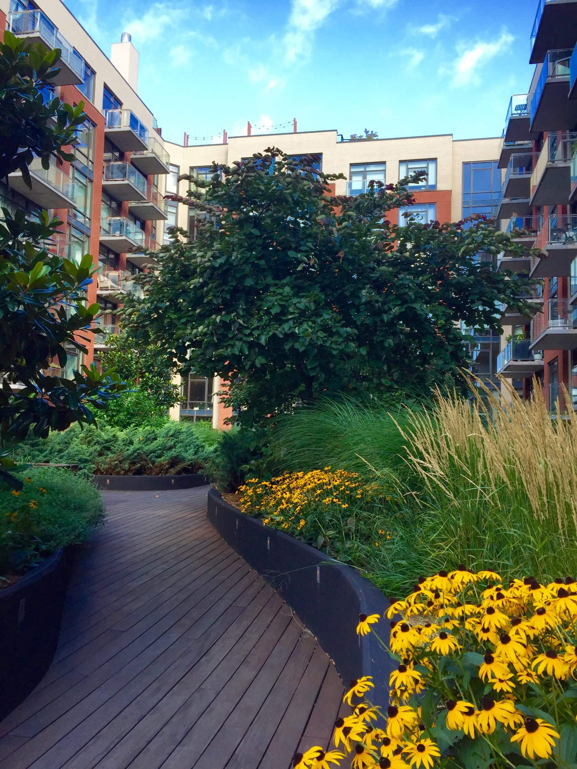 Highview Creations - Residential Green Roof for 101 Bedford