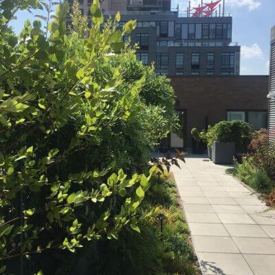 Highview - Green Roof - Rooftop Garden NYC
