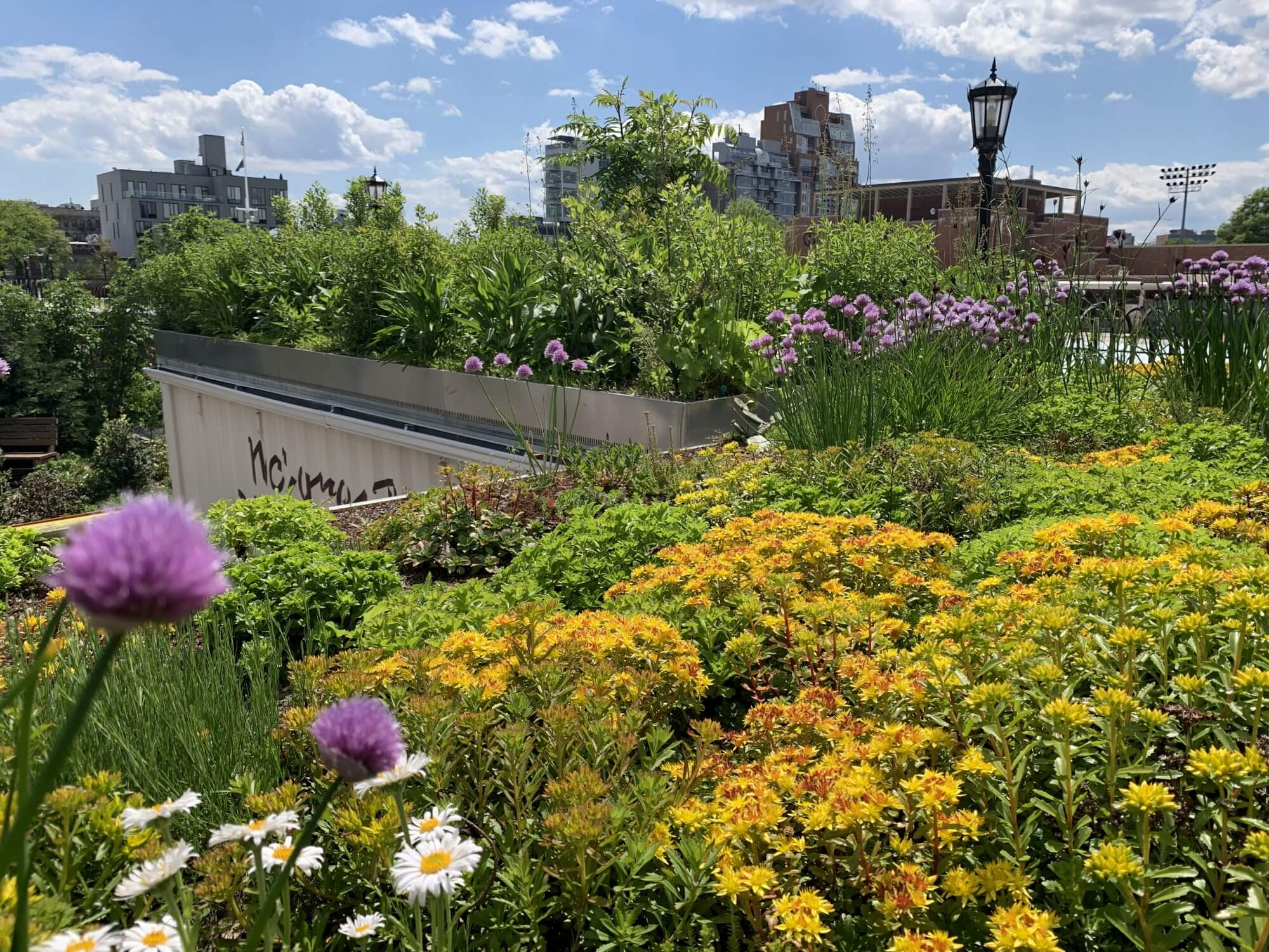Highview Creations - Institutional Green Roof for McCarren Park Demonstration