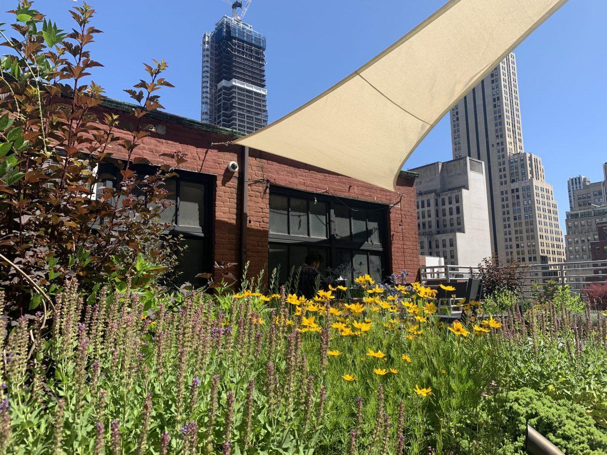 green roof new york city_highview creations