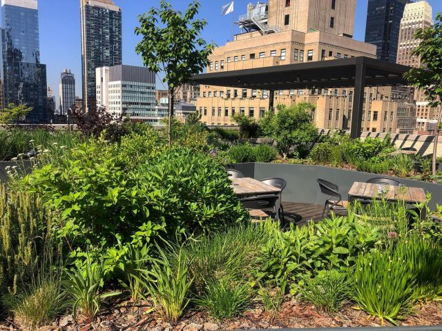 One of our favorite projects in Manhattan at the @hollingsworthnyc. With creative freedom, we designed this #rooftopgarden to be relaxing and encompassed with #nativeplants